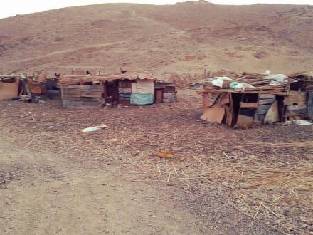 Beduinen Häuser - Tour & Ausflug