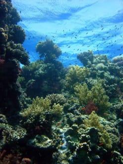 Tauchen mit Aquarius - Tauchen Makadi Bay