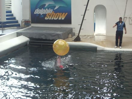 Delphinarium in Varna - Delfinarium Varna