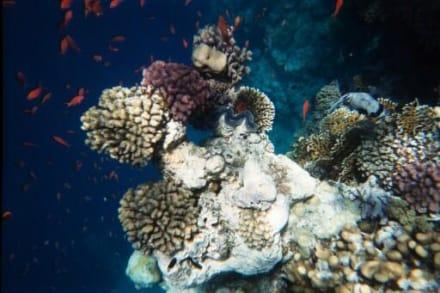 Unterwasserwelt - Schnorcheln Sharm el Sheikh