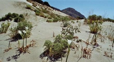Die Sanddünen beim Kalogria-Strand - Strand Kalogria