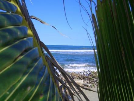 Blick zum Atlantic - Playa Cabarete