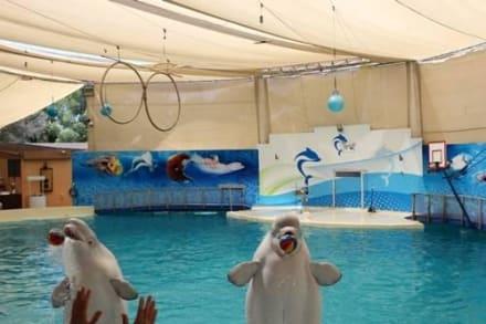 Naturreservat/Zoo - Delfinarium Belek