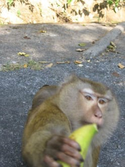 gib mir endlich meine Banane... - Affenberg