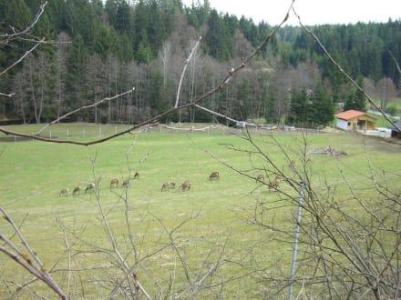 Kleblmühle 1 - Hirschgehege Kleblmühle