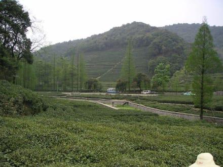 Teeplantage - Teeplantage