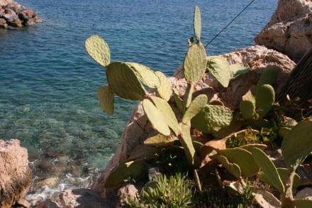 Spaziergang am Wasser - Strandpromenade Agios Nikolaos
