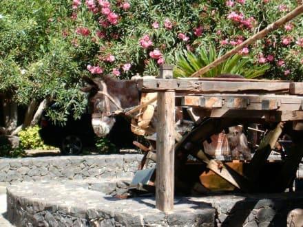 Der Wasseresel - Wasseresel Pajara