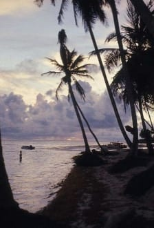 Morgendämmerung unter Palmen - Sonnenaufgang