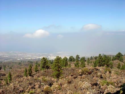 El Teide - Pflanzen - Teide Nationalpark