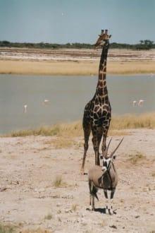 Mißtrauen - Etosha Nationalpark