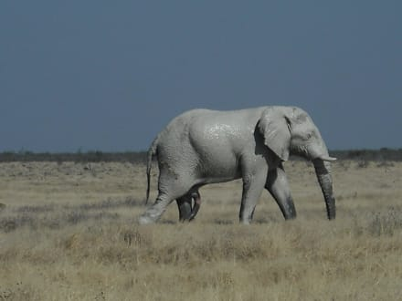 Ausflug in den Etosha Park - Etosha Nationalpark