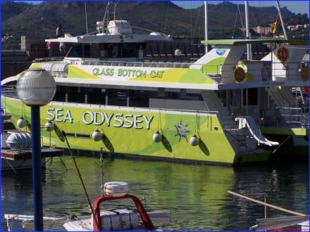 Sea Odyssey Glas Bottom Cat - Yachthafen Cala Ratjada