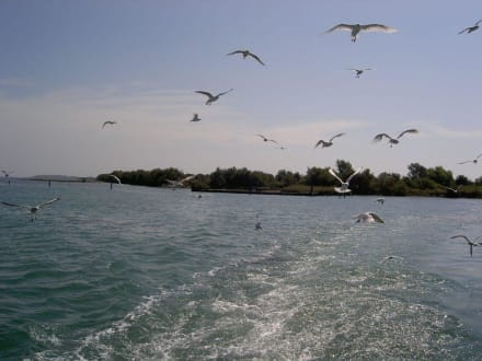 Muschelinsel - Muschelinsel