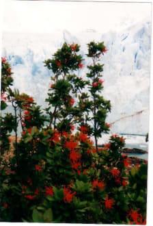 Glaciar Perito Moreno - Nationalpark Los Glaciares