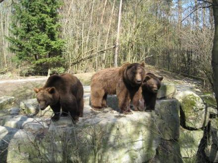 Bären - Wildpark Bad Mergentheim