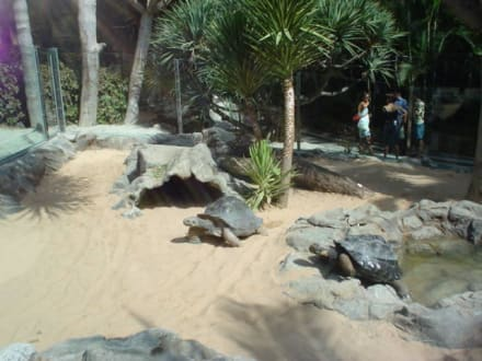 Riesenschildkröten - Loro Parque