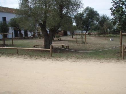 Naturreservat/Zoo - Nationalpark Coto de Doñana