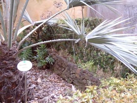 Botanischer Garten in Puerto de la Cruz - Botanischer Garten Puerto de la Cruz
