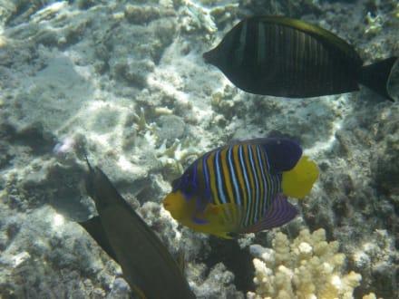 Fischi - Schnorcheln Marsa Alam