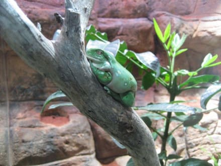 Frosch - Wildlife World