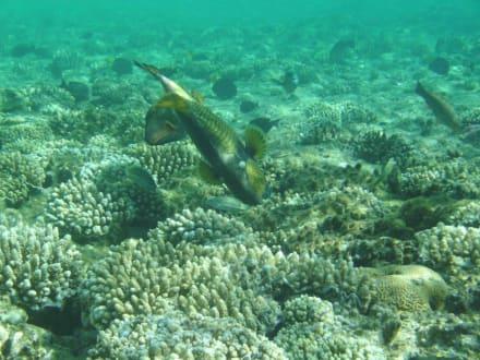 Unterwassereindrücke... - Tauchen Sharm el Sheikh