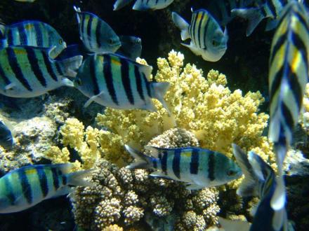 Unterwasseraufnahme - Tauchen Sharm el Sheikh