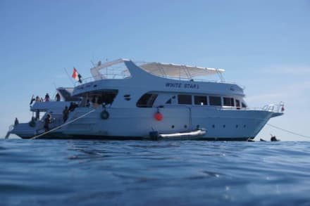 Unser Boot - Delfinschwimmen Delfine & Meer