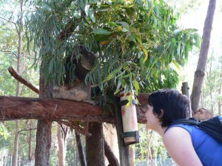Blick hinter die Kulissen - Koala Hospital