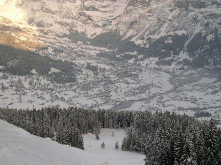 Skigebiet Grindelwald - Skigebiet Grindelwald