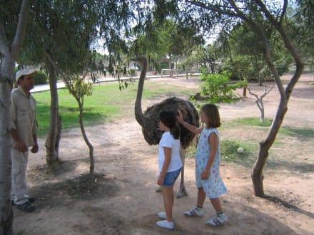 Strauß streicheln - Friguia Park