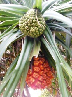 Exotische palme bild hotel ypsilon ypsylon in beruwala for Exotische hotels