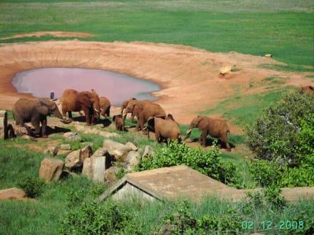 Elefanten-Familie am Wasserloch der Voi-Lodge - Tsavo Ost Nationalpark