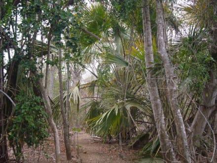 Komodo - Nationalpark Komodo
