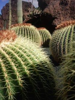 jardin de cactus - Jardin de Cactus / Kaktusgarten Guatiza