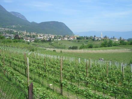 Kaltern vom Weinweg - Kaltern