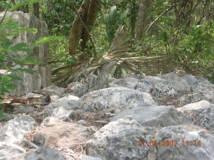 Diese Tierchen lauern überall - Ruine Chichén Itzá