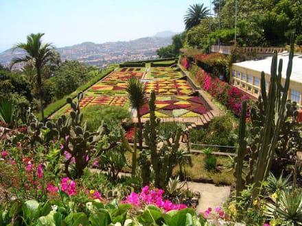 Im Jardim botanico - Botanischer Garten Funchal