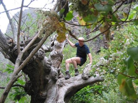 Helmut in der Höllenschlucht - Wasserfälle - Barranco del Infierno