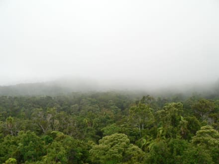 Nebel über dem Regenwald - Skyrail Rainforest Cableway