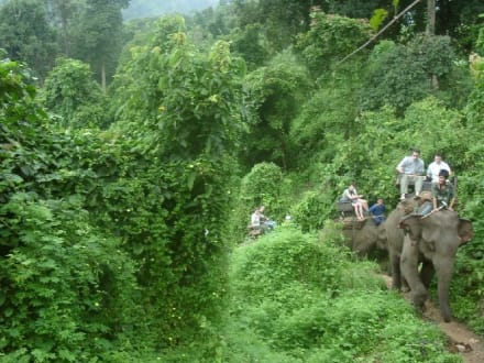 Elefanten am Berg - Elefantenreiten Chian Rai