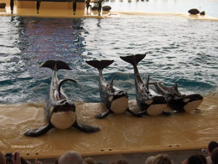 Orca Wale - Loro Parque