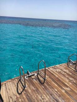 Einstieg - Delfinschwimmen Delfine & Meer