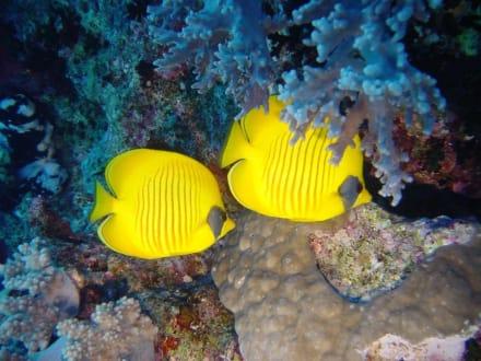 Tauchen mit Aquariusredsea - Tauchen Makadi Bay