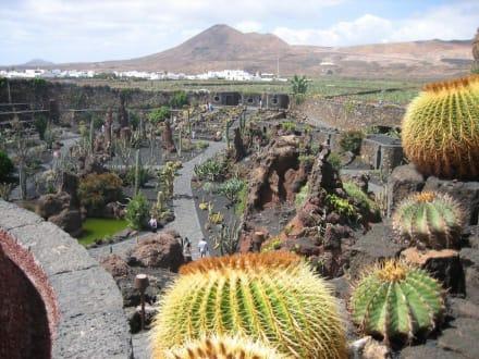 Blick vom Mühlenstandort aus - Jardin de Cactus / Kaktusgarten Guatiza
