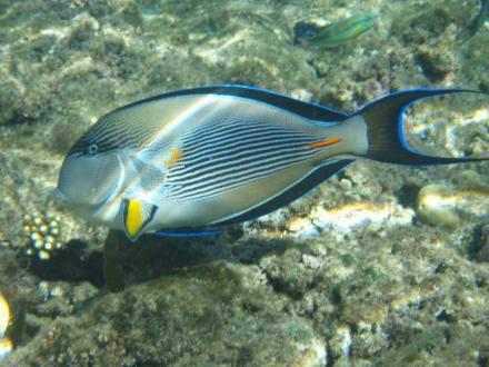 Am Hausriff - Schnorcheln Coraya Bay Marsa Alam