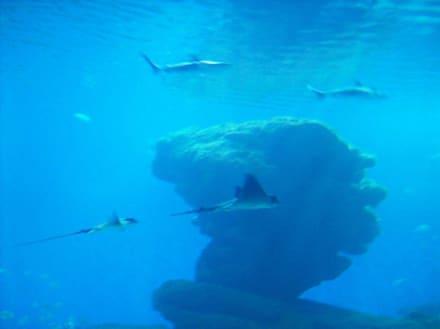 Aquarium in Palma - Palma Aquarium