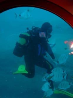 Blick aus der Subcat in 30 Meter Tiefe - SubCat Tour