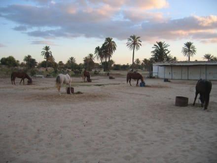 Ranch Djerba Caravane - Ranch Djerba Caravane