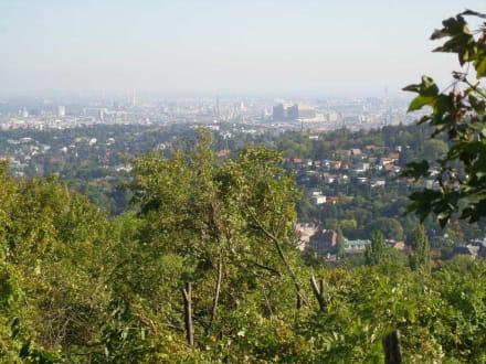 Neustifter Weinfelder, Blick auf Wien - Neustifter Weingärten